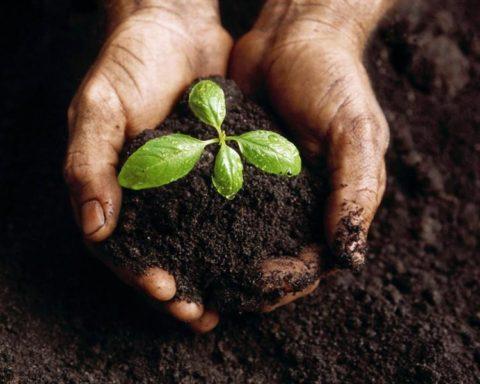 Open Organics Recycling Committee Call – Feb. 16