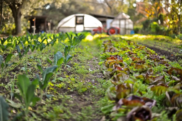 Sweetwater Organic Community Farm Tour – an RFT ELLS event!