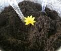 POSTPONED – Harvest Community Garden Composting Event – Nov. 12th